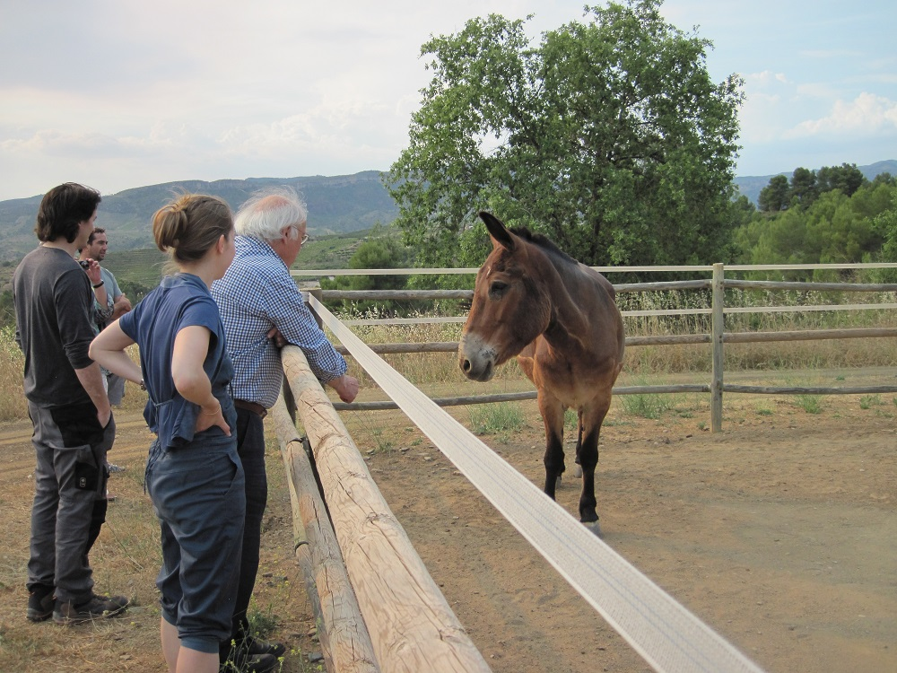 Clare the mule