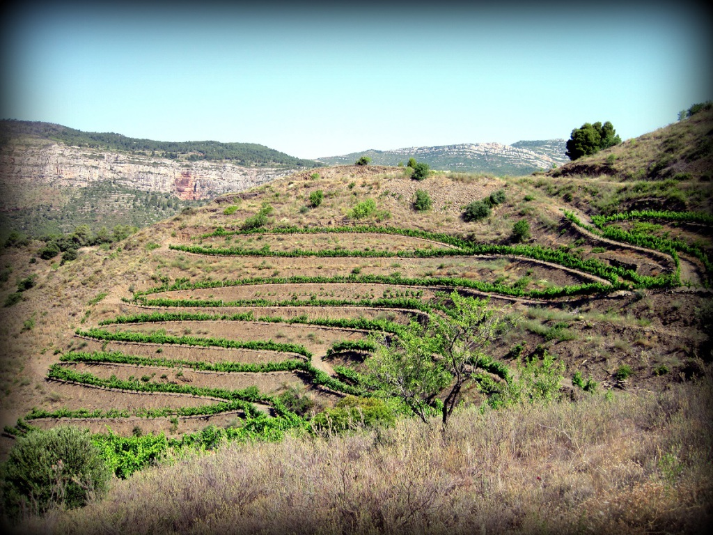 Mas_Alta_Priorat_Spain