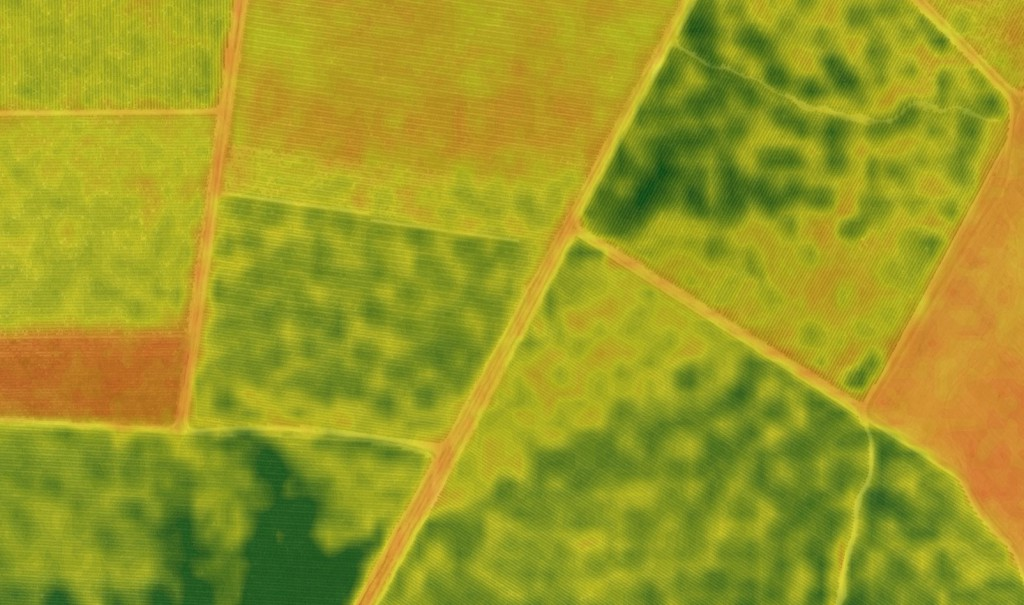 NDVI of termite circles in a Merlot block
