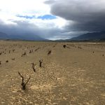 Ghost vineyards of Villiersdorp